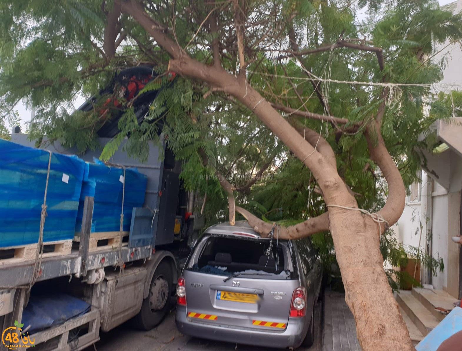 فيديو: لطف الله حال دون وقوع الكارثة اثر اصطدام شاحنة بشجرة ضخمة في يافا