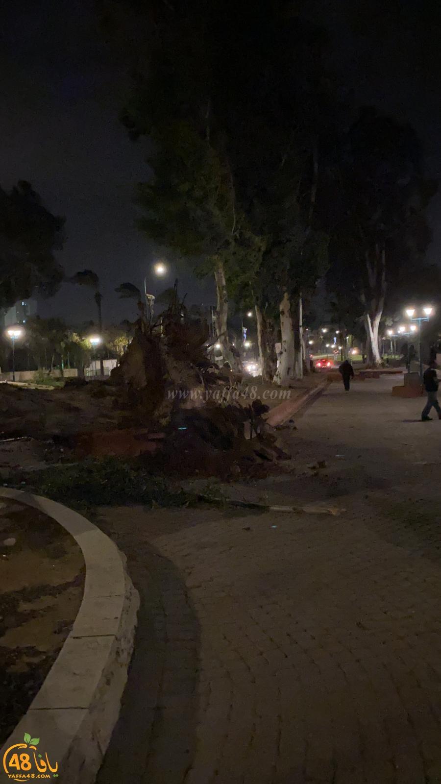 بالفيديو: سقوط أشجار ضخمة في اللد والرملة بسبب الرياح