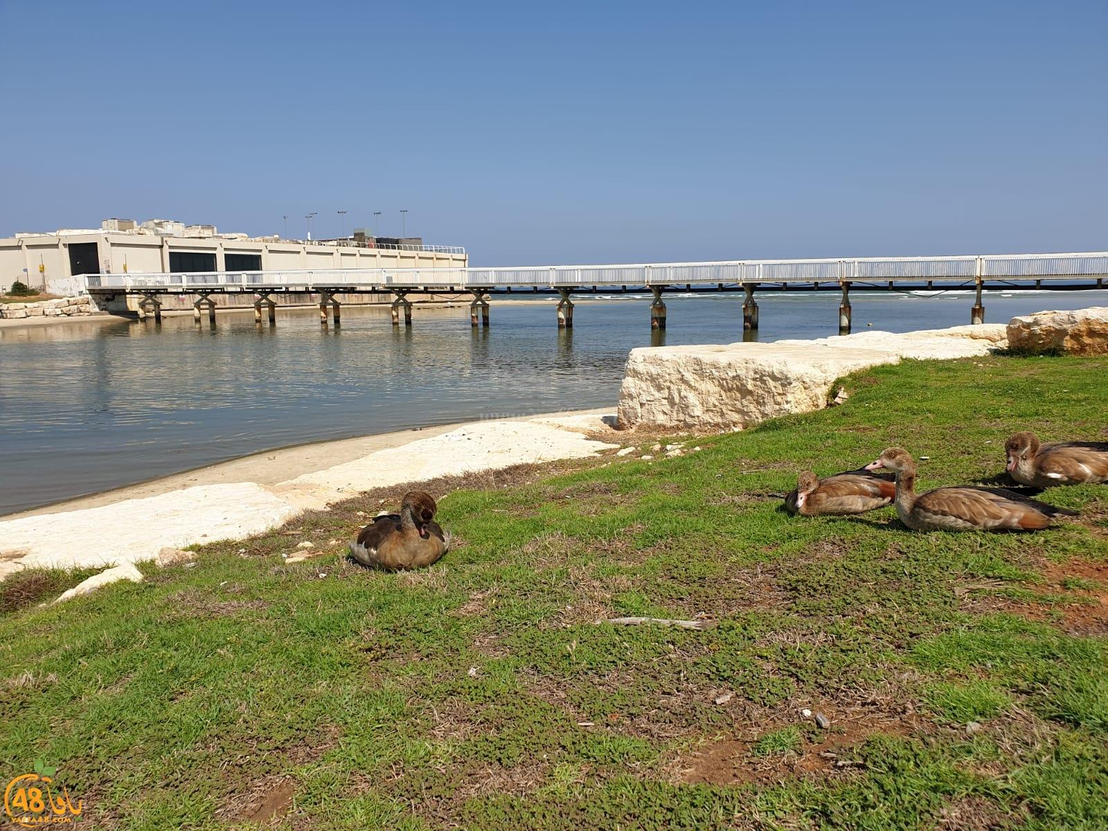 شاهد: مناظر رائعة من مصبّ نهر العوجا في البحر شمال يافا هذا الصباح