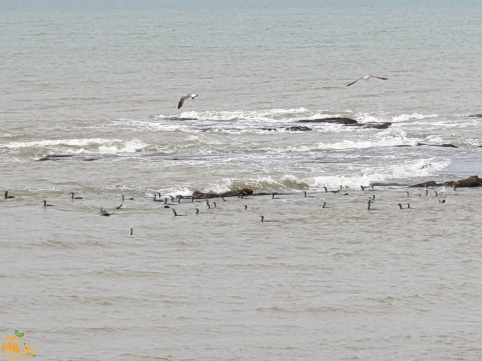 شاهد: شاطئ يافا والطيور هذا الصباح