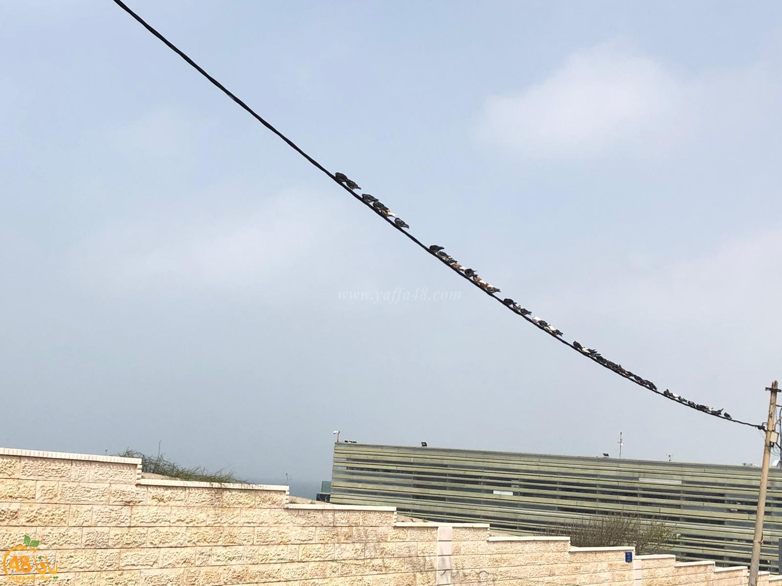 صور: طيور الحمام تصطف بانتظام فوق سلك كهرباء قرب مقبرة الكازاخانة بيافا