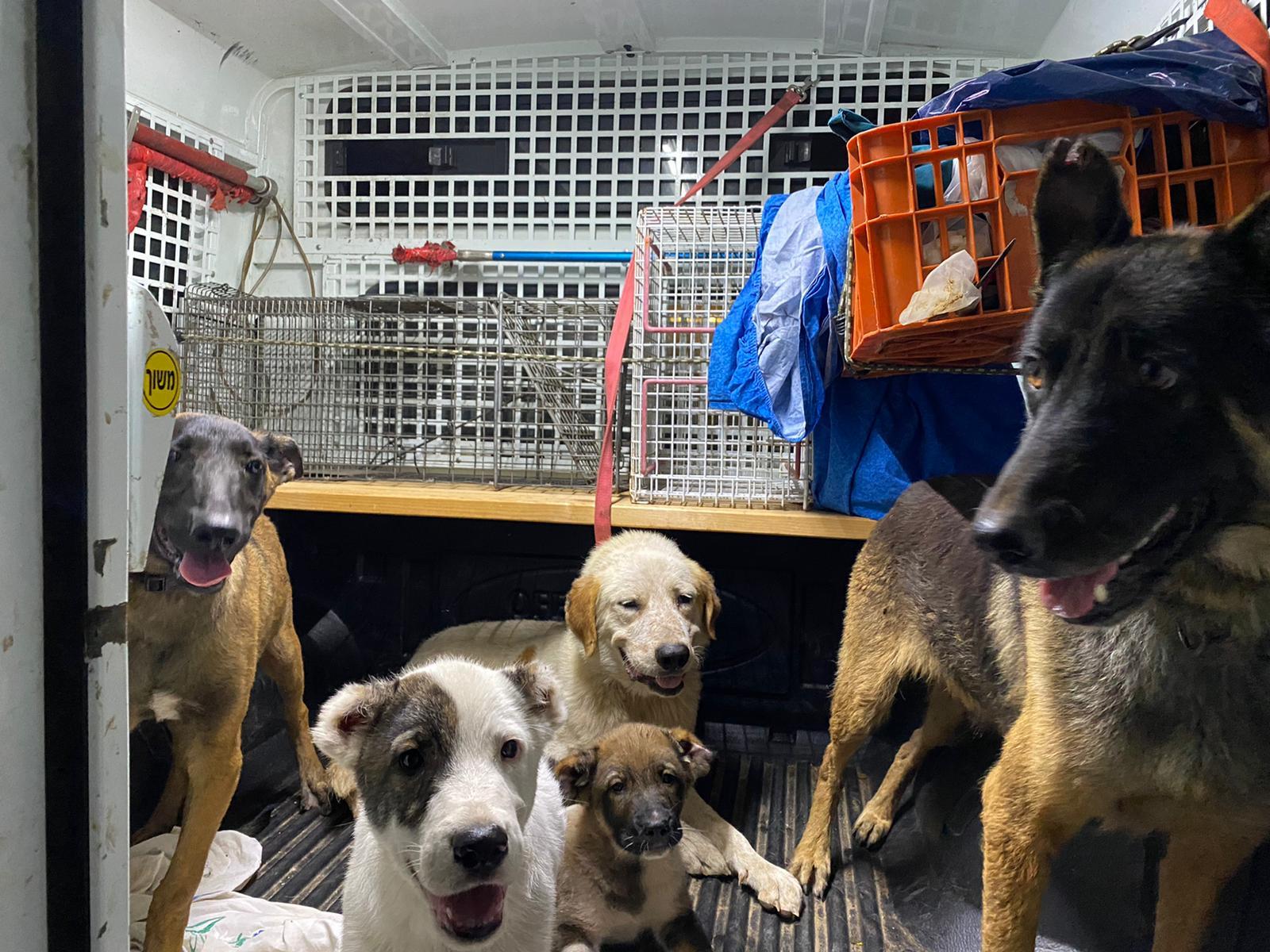 الشرطة: ضبط ذخيرة ومخدرات في حي الجواريش بالرملة ومصادرة 11 كلبا