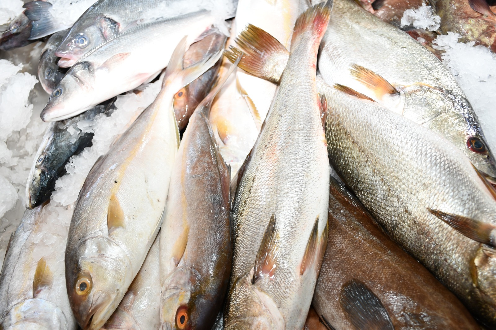 كل أنواع الأسماك الطازجة في مطعم ومسمكة fish & chips بإدارة زكريا زينب في ميناء يافا