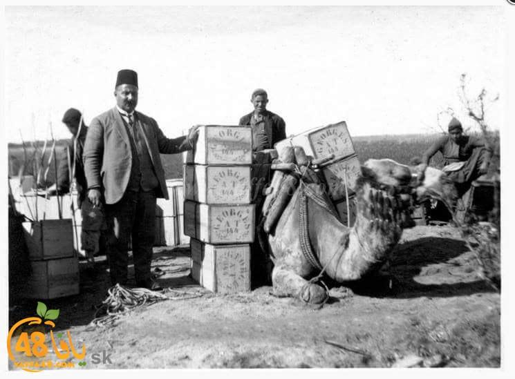 مع حلول موسم جني محاصيله - فيديو نادر من سوق العمل في برتقال يافا