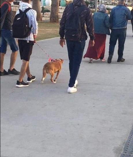 سيدة تطلب مساعدتها بالعثور على كلبها الضائع في يافا
