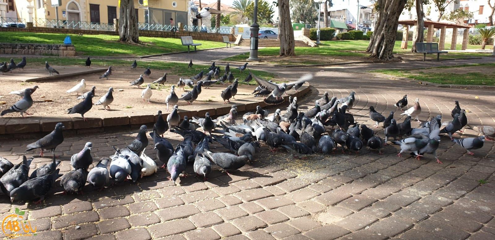 فيديو: لقطات رائعة لطيور الحمام في حديقة العجمي بيافا