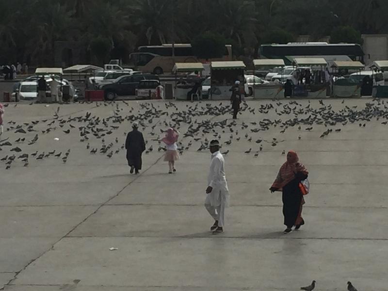 صور لمعتمري اللد والرملة خلال زيارتهم للمدينة المنوّرة