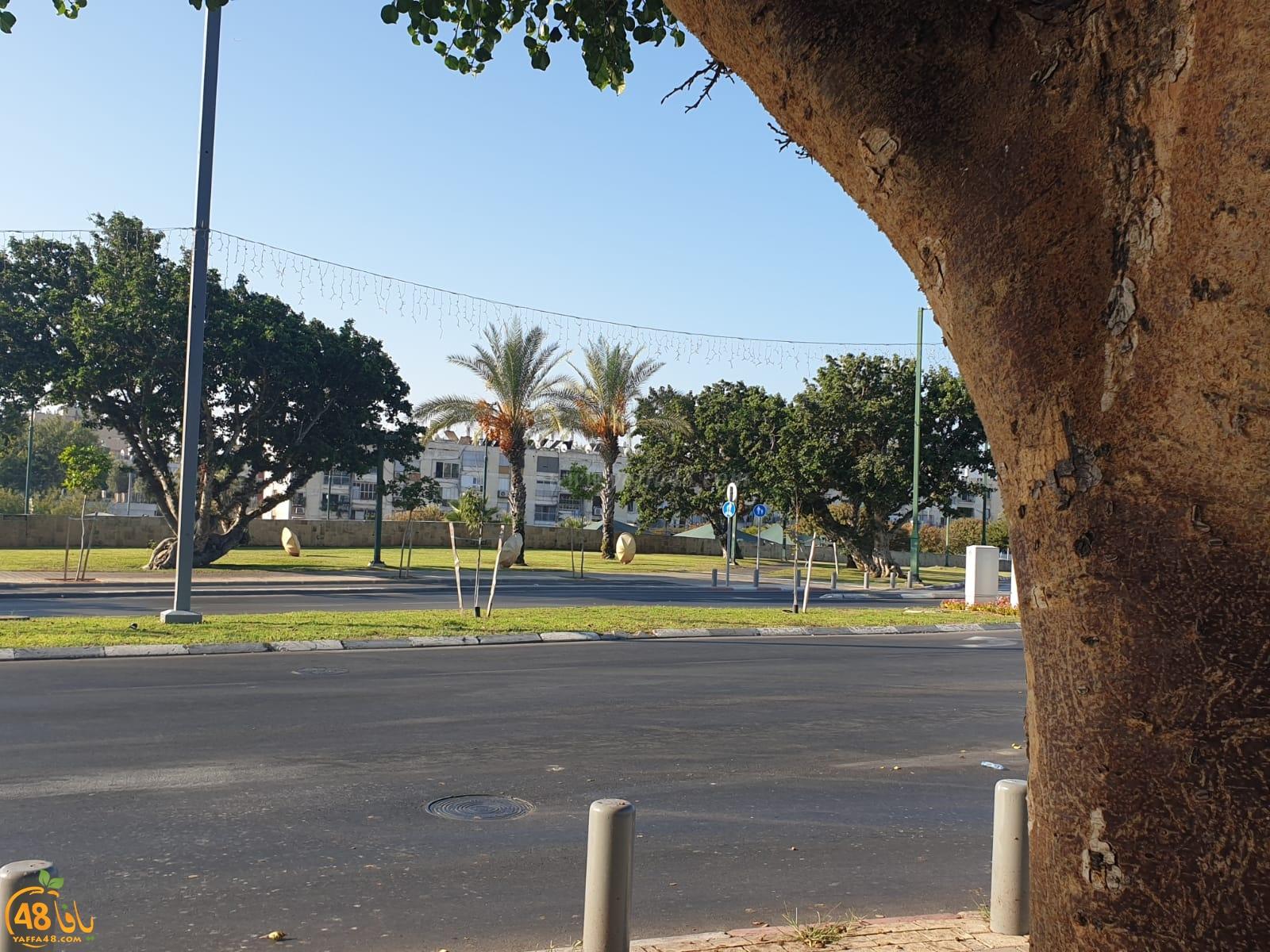 فيديو: شجرة الجميز شاهدة على تاريخ وماضي يافا العريق