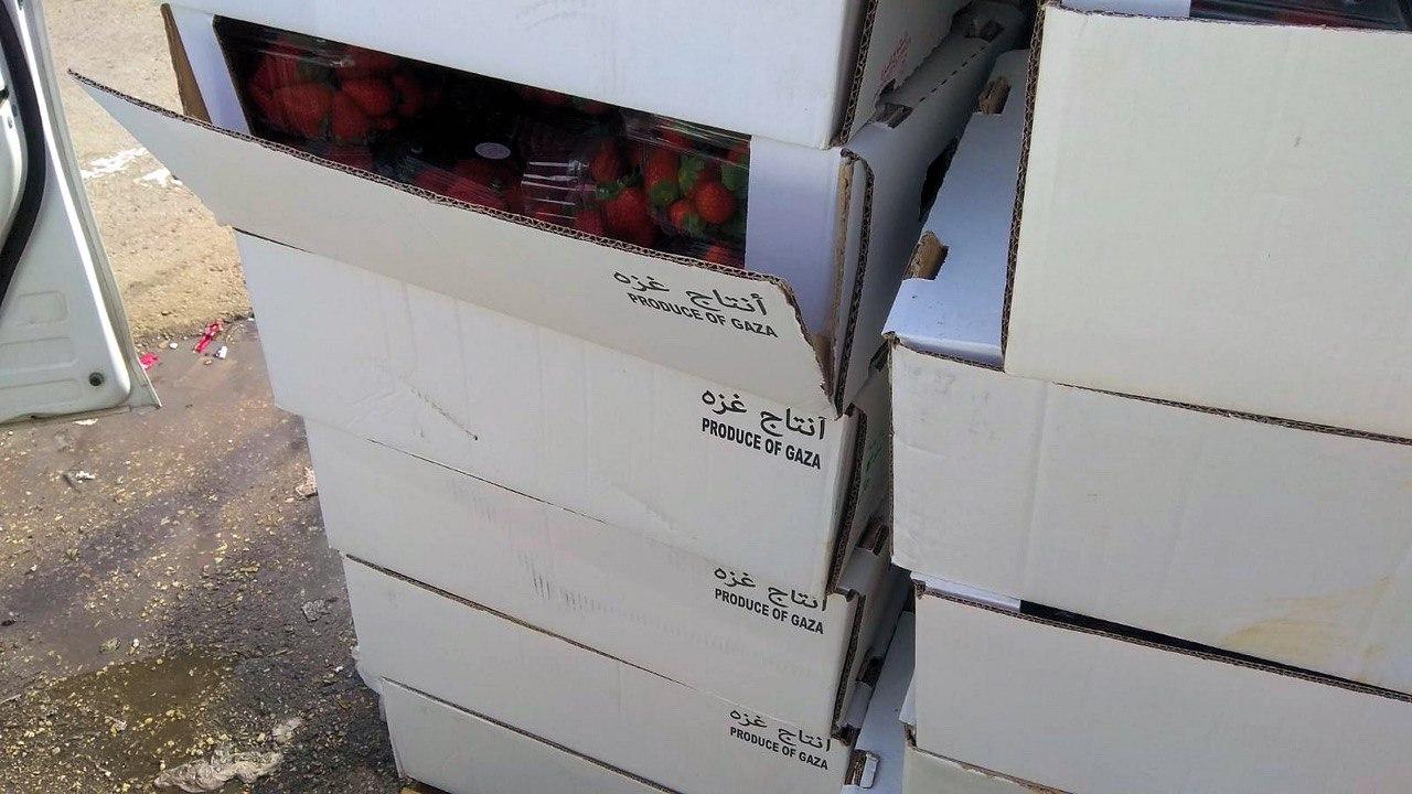 الرملة: ضبط أكثر من طن فراولة مهرّبة من غزة واعتقال مشتبهين