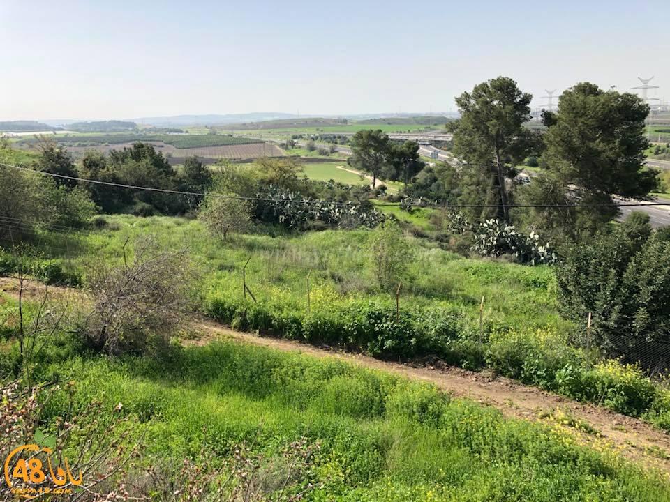 أيام نكبة - تعرّف على قرية دانيال المهجرّة قضاء الرملة .. صور