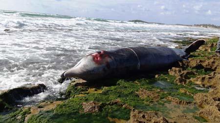العثور على حوت نافق على شاطئ قرب حيفا بطول يصل الى نحو 5 امتار