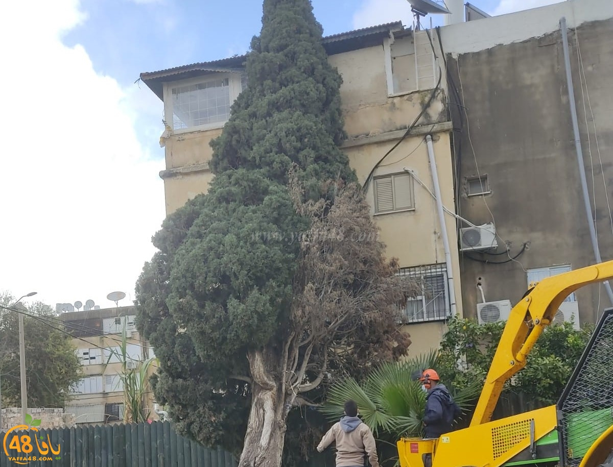 اللد: سقوط شجرة ضخمة على منزل اثر الرياح العاصفة