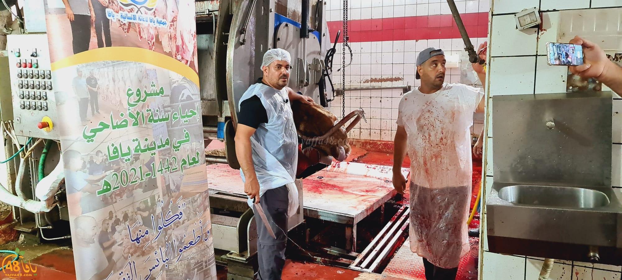 فيديو: جمعية يافا تُنهي ذبح أضاحي مدينة يافا 30 عجلاً