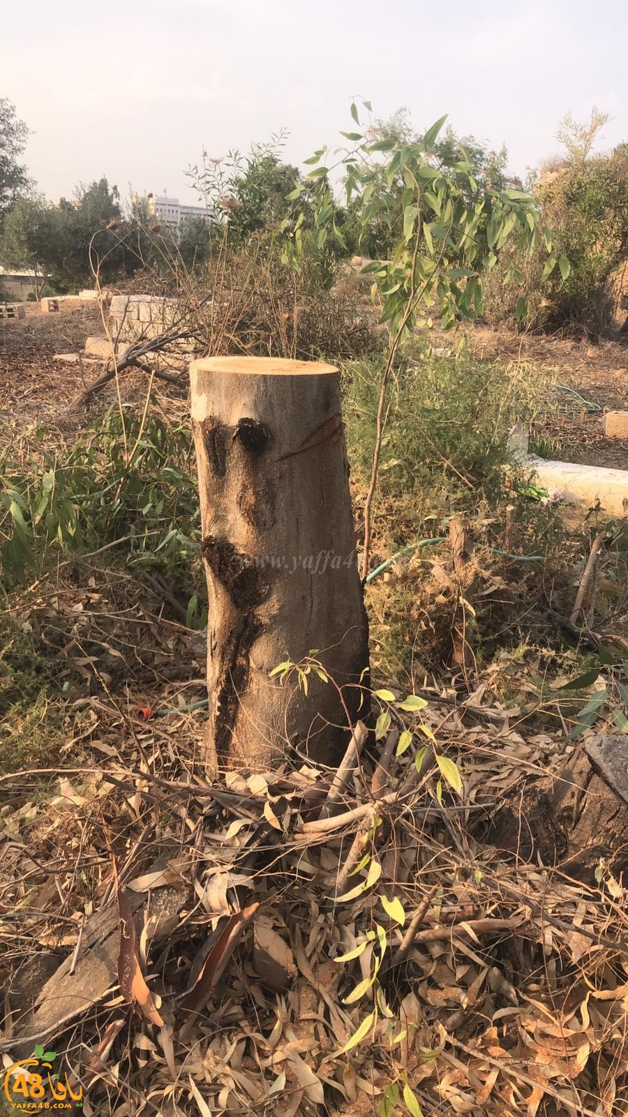 الجمعة: معسكر عمل لتنظيف المقبرة الاسلامية الشرقية بمدينة الرملة